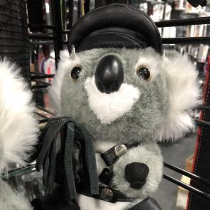 Sir Koala